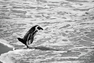 Awkward Wall Art - Photograph - Penguin On A Beach - Bath Time by Delphimages Photo Creations