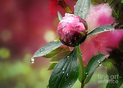 Mixed Media - Peony Bud And  Refractions by Morag Bates