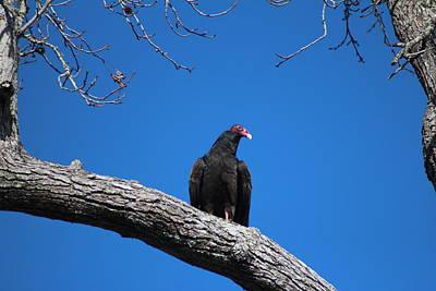 Photograph - Perched Vulture by Cynthia Guinn
