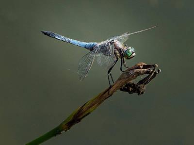 Photograph - Perching Dragon by Jean Noren
