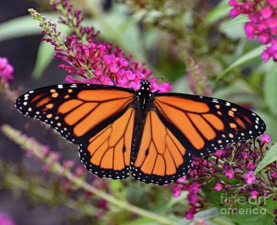 Tina Turner - Perfect Male Monarch by Cindy Treger