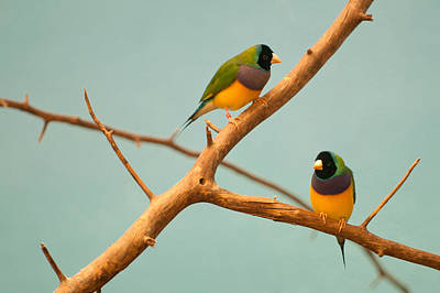 Photograph - Perfect Pair by Paul Mangold