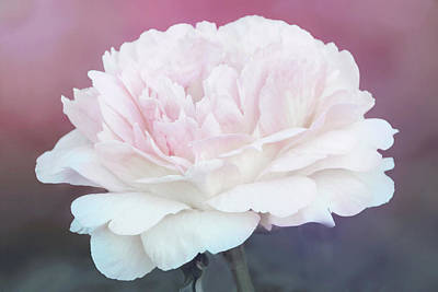 Photograph - Perfect Peony by Leda Robertson