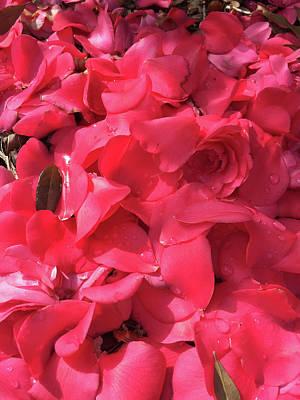 Photograph - Petals Of Love by Matthew Seufer