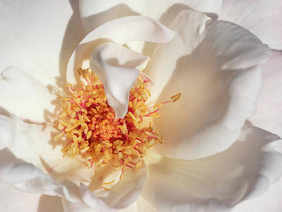 Photograph - Petals by Robin Zygelman