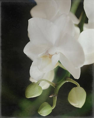 Photograph - Phalaenopsis Orchid By Tl Wilson Photography by Teresa Wilson