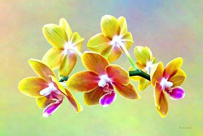 Photograph - Phalaenopsis Orchid Taida Pride Cupid by Susan Savad