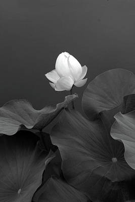 Photograph - Phantom Floral by Jessica Jenney