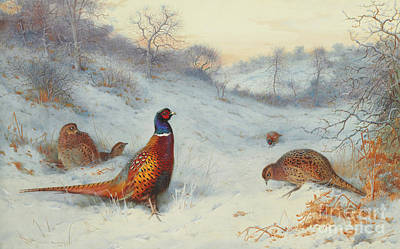 Painting - Pheasant In The Snow by Archibald Thorburn