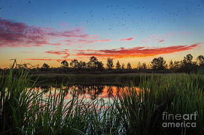Photograph - Phinizy Swamp Sunrise - Augusta Ga by Sanjeev Singhal