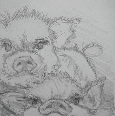 Drawing - Photo Bomber Sketch by Jani Freimann