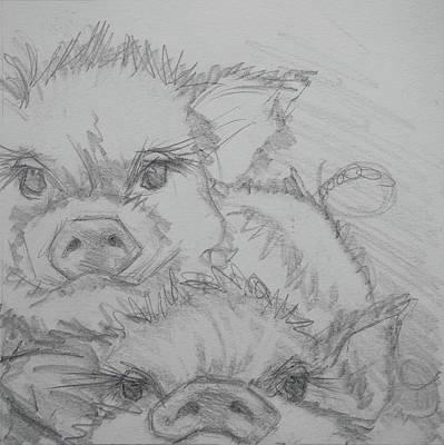 Photo Bomber Sketch Original