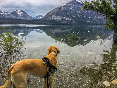 Art Print featuring the photograph Photo Dog Jackson At Glacier by Matthew Irvin