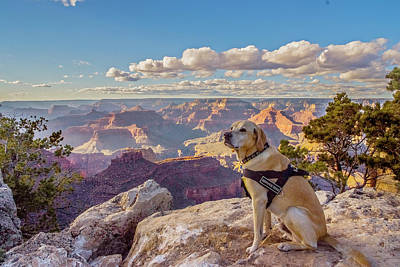 Art Print featuring the photograph Photo Dog Jackson At The Grand Canyon by Matthew Irvin