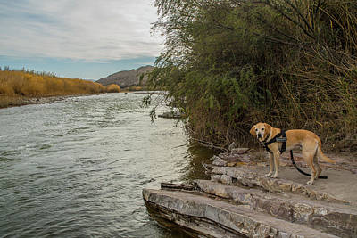 Art Print featuring the photograph Photo Dog Jackson At The Rio Grande by Matthew Irvin