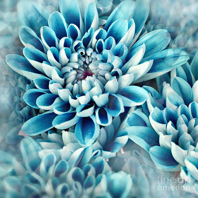 Photo Illustration Of Abstract Flower Art Print by Annmarie Young