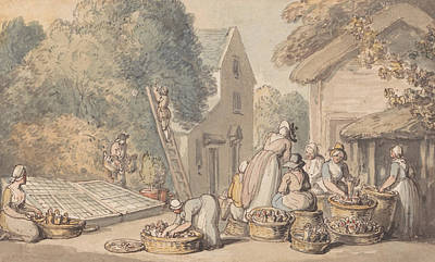 Drawing - Picking Mulberries by Thomas Rowlandson