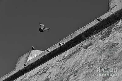 Gold Pattern - Pigeons flying in front of the canon battery in Portugal by Angelo DeVal