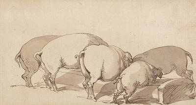 Drawing - Pigs At A Trough by Thomas Rowlandson