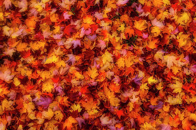 Photograph - Pile Of Colorful Autumn Leaves by Garry Gay