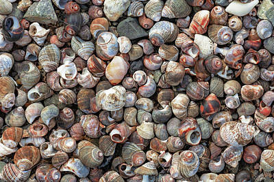 Photograph - Pile Of Seashells by Todd Klassy