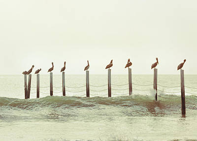 Photograph - Piling Pelicans by Jamart Photography