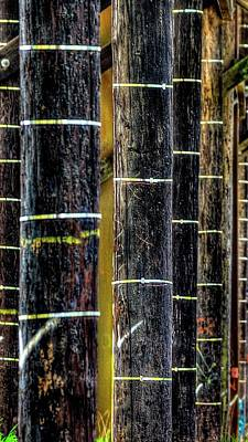 Jerry Sodorff Royalty-Free and Rights-Managed Images - Pilings Under Third Street Bridge by Jerry Sodorff