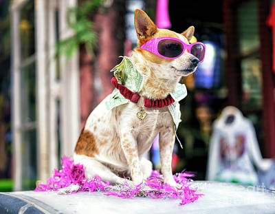Photograph - Pimp Dog On Bourbon Street New Orleans by John Rizzuto