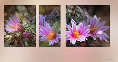 Photograph - Pincushion Cactus by Karen Rispin