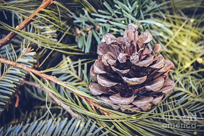 Photograph - Perfect Pine Cone by Colleen Kammerer