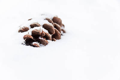Photograph - Pine Cone In Snow by Jeanette Fellows