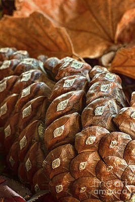 Photograph - Pine Cone Of The Female Persuasion by Susan Warren