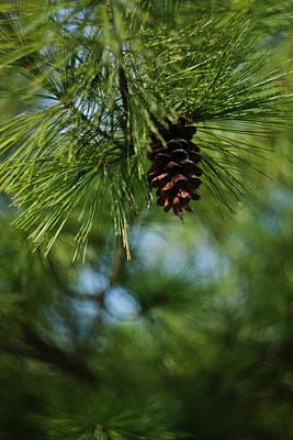 Photograph - Pine Cone by Sarah Morgan