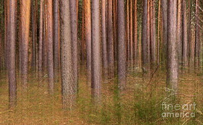 Fantasy Royalty-Free and Rights-Managed Images - Pine forest ghost by Hernan Bua