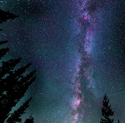 Photograph - Pine Sentinels And The Milky Way by Philip Rispin