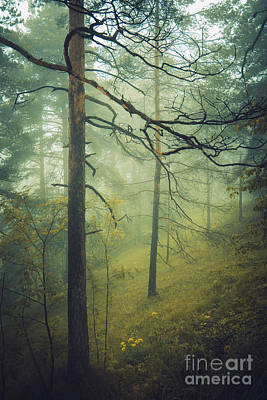 Photograph - Pine Tree Forest by Gazali