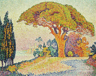 Painting - Pine Trees At Bertaud, Saint Tropez Provence by Paul Signac
