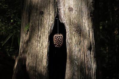 Photograph - Pinecone  by Juan Contreras
