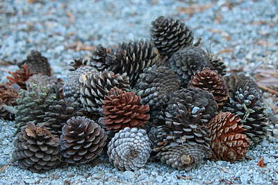Cargo Boats Rights Managed Images - Pinecones  Royalty-Free Image by Christy Pooschke
