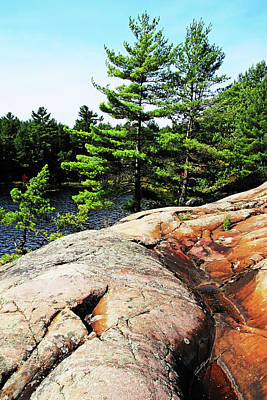 Photograph - Pines by Debbie Oppermann