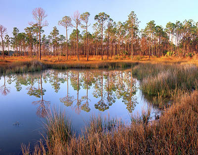 Photograph - Pines Reflected In Pond Near Piney by Tim Fitzharris/ Minden Pictures