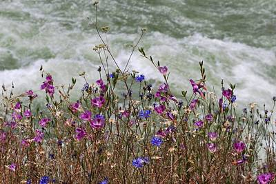 Photograph - Pink And Purple Flowers River View by Matt Harang