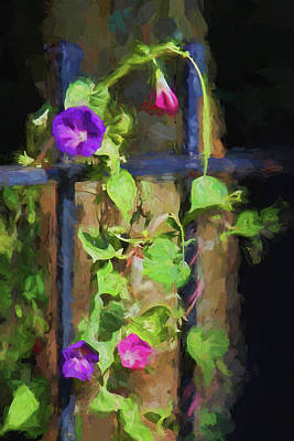 Photograph - Pink And Purple Morning Glories by HH Photography of Florida
