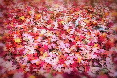Photograph - Pink And Red Maple Confetti  by Saija Lehtonen