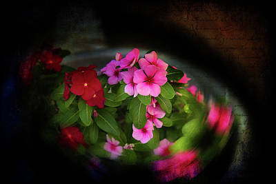 Photograph - Pink And Red by Milena Ilieva