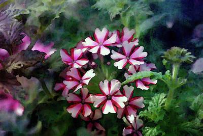 Amy Hamilton Watercolor Animals - Pink Asterisk 6518 IDP_2 by Steven Ward