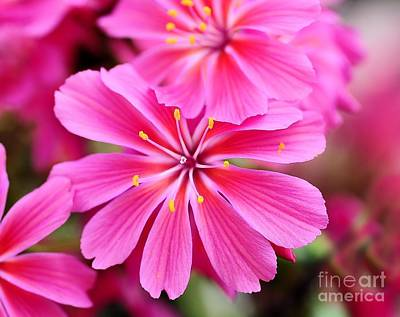 Photograph - Pink Beauty by Elaine Manley