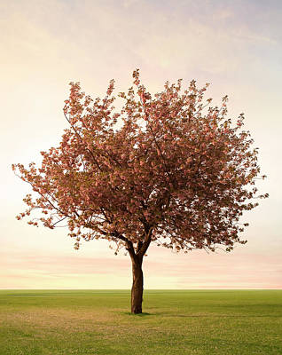Photograph - Pink Blossom Tree by Zap Art