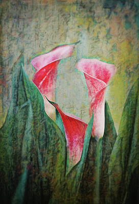 Photograph - Pink Calla Lilies by Bellesouth Studio
