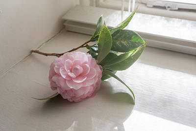 Photograph - Pink camellia by the window by Natalie Board